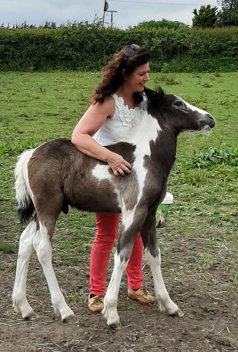 Nicola69horse